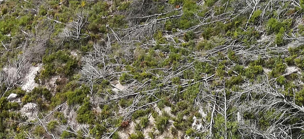 fældning af træ