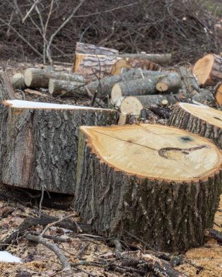 Træ fjernes