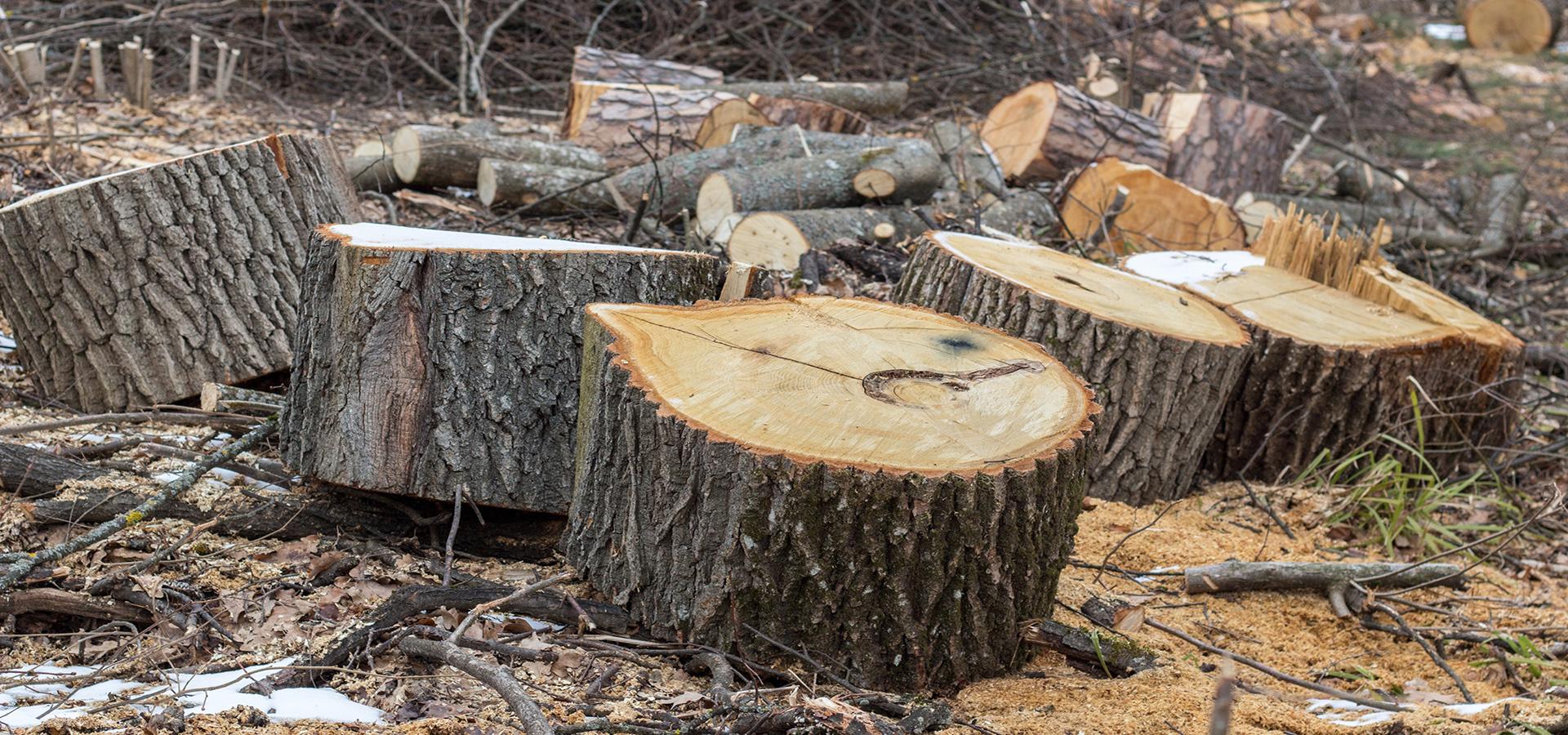 Træer fældes og fjernes