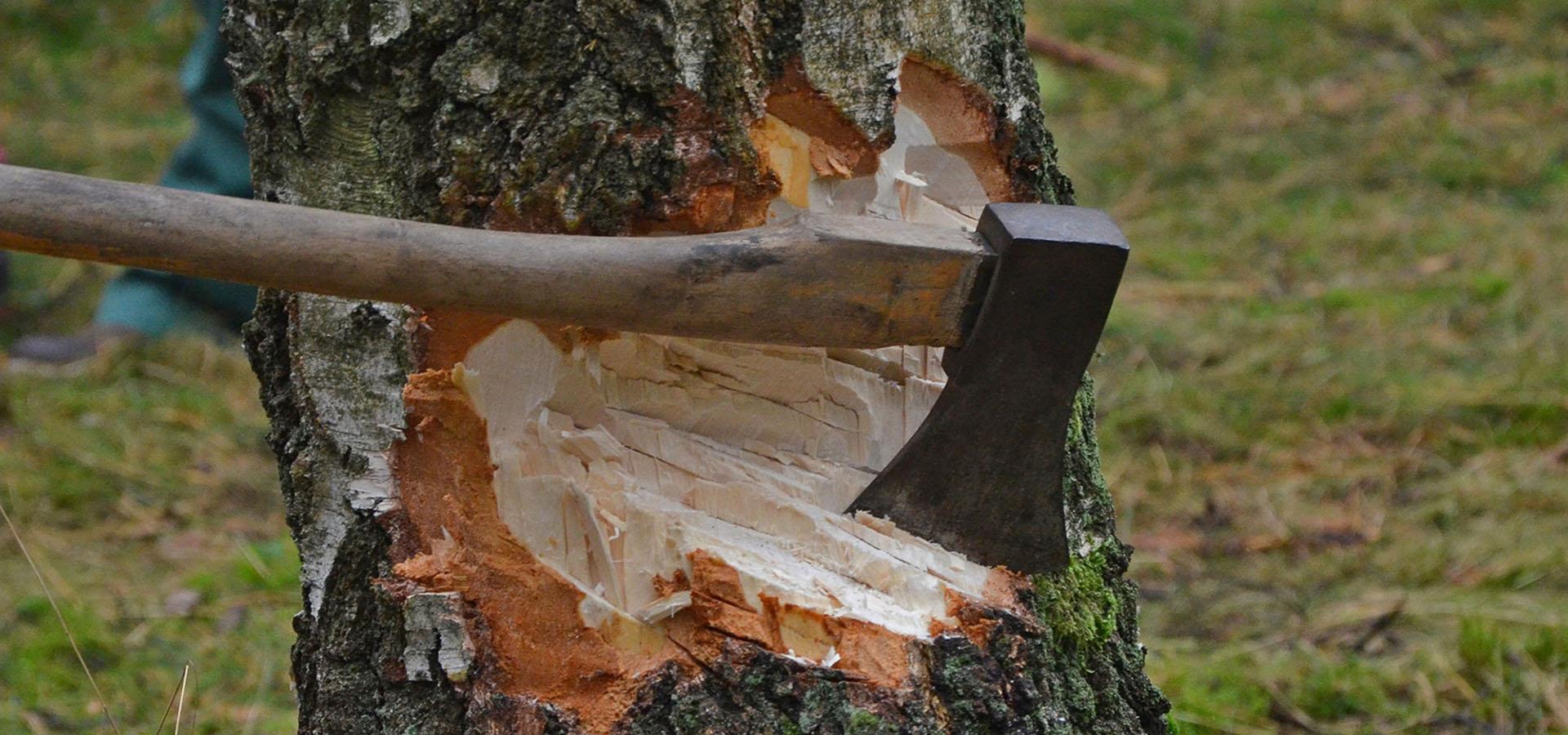 Træer fjernes
